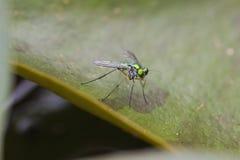 与彩虹翼的发光的绿色飞行 图库摄影