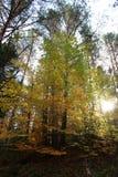 与彩虹色的叶子的树 库存照片