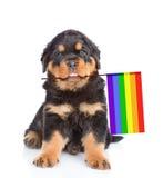 与彩虹象征同性恋权利的颜色旗子的Rottweiler小狗 查出在白色 免版税库存照片