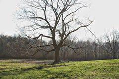 与影子的结构树 免版税库存照片