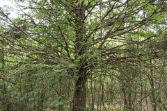 与很多分支的树 免版税图库摄影
