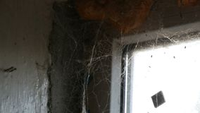 与很多蜘蛛网的老被放弃的窗口对此 影视素材