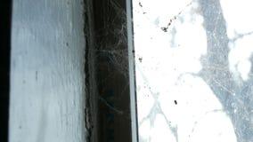 与很多蜘蛛网的老被放弃的窗口对此 股票视频