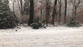 与很多降雪的冬天 股票视频