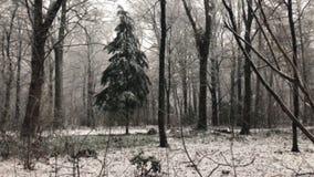 与很多降雪的冬天 股票录像