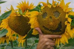 与微笑的向日葵 免版税库存照片