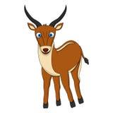 与微笑的布朗逗人喜爱的羚羊 免版税库存图片