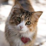 与心脏标记的逗人喜爱的猫 库存照片