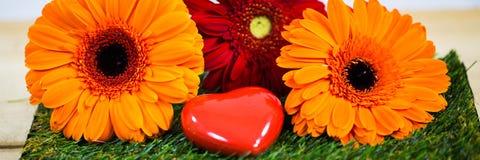 与心脏的大丁草,象征性 春天,开始春天 图库摄影