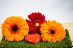 与心脏的大丁草,象征性 春天,开始春天 免版税库存图片