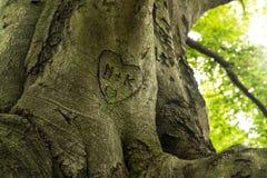 与心脏的树干 免版税库存图片