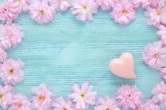 与心脏的桃红色樱桃鲜花框架在平蓝色木的背景 免版税库存照片
