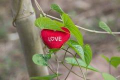 与心脏的绿色藤在情人节 免版税库存图片