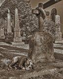 与忠诚伤心的一条狗 免版税库存照片