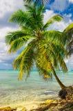与惊人的棕榈树,多米尼加共和国的美丽的异乎寻常的加勒比海岸, 免版税库存图片