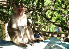 与惊奇的面孔的滑稽的猴子 免版税库存图片