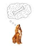 与想法泡影的逗人喜爱的狗考虑骨头的 免版税库存图片