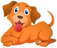 与愉快的面孔的小犬座 库存例证