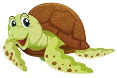 与愉快的面孔的海龟 免版税图库摄影