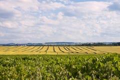 与成熟五谷的风景 免版税图库摄影