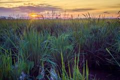 与成熟稻2的稻田 免版税库存图片