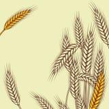 与成熟黄色麦子耳朵传染媒介的背景 免版税图库摄影