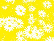 与戴西的花卉样式在黄色背景开花 免版税库存照片
