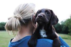 与所有者的布朗逗人喜爱的小狗 免版税图库摄影