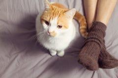 与所有者的猫在床上 库存图片