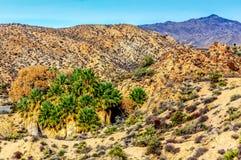 与扇形棕榈树的沙漠绿洲 图库摄影