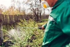 与手工杀虫剂喷雾器的农夫喷洒的树反对昆虫在春天庭院里 农业和从事园艺 图库摄影