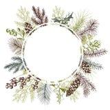 与手拉的圣诞节植物的传染媒介框架 免版税库存照片
