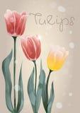 与手拉的红色和黄色郁金香的两张明信片 库存图片