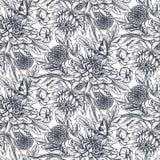 与手拉的菊花花的传染媒介无缝的样式 免版税库存照片