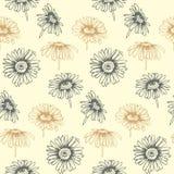 与手拉的雏菊花的无缝的传染媒介样式 盖子的设计,纺织品,包装 免版税库存照片