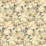与手拉的雏菊花的无缝的传染媒介样式 盖子的设计,纺织品,包装 库存照片