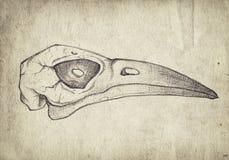 与手拉的鸟头骨的老葡萄酒纸 免版税库存照片