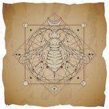 与手拉的黄蜂的传染媒介例证和在葡萄酒纸背景的神圣的几何标志与被撕毁的边缘 抽象神秘主义者 皇族释放例证