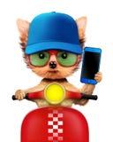 与手机的可爱的小狗坐摩托车 免版税图库摄影