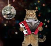 与手风琴的猫在阶段 免版税库存照片