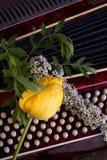 与手风琴和郁金香花的构成 图库摄影