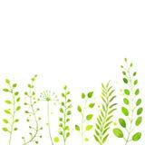 与手画的白色春天背景 库存照片