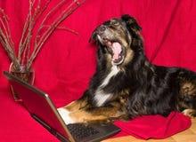 与打呵欠的笔记本的狗 图库摄影