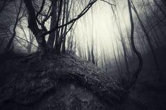 与扭转的根的树在被困扰的森林里 库存照片