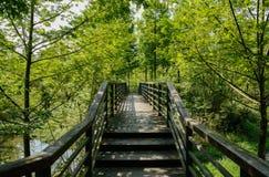 与扶手栏杆的Planked人行桥在河在晴朗的s森林  免版税库存图片