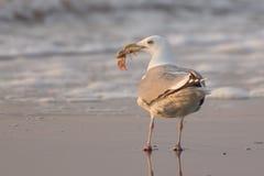 与抓住的海鸥 免版税图库摄影