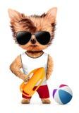 与抢救能和海滩球的滑稽的动物 库存例证