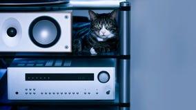 与报告人的虎斑猫在高保真机架 免版税库存图片