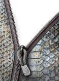 与拉链的蛇皮革 库存照片