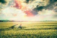 与拖拉机领域和踪影的美好的自然风景在日落天空的 免版税库存图片
